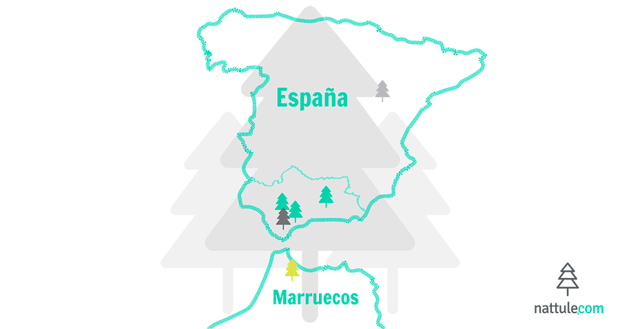 5 Spanish forests that will make you consider living like a hermit