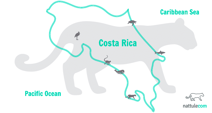 6 Faunal Paradises in Costa Rica: the Living Laboratory