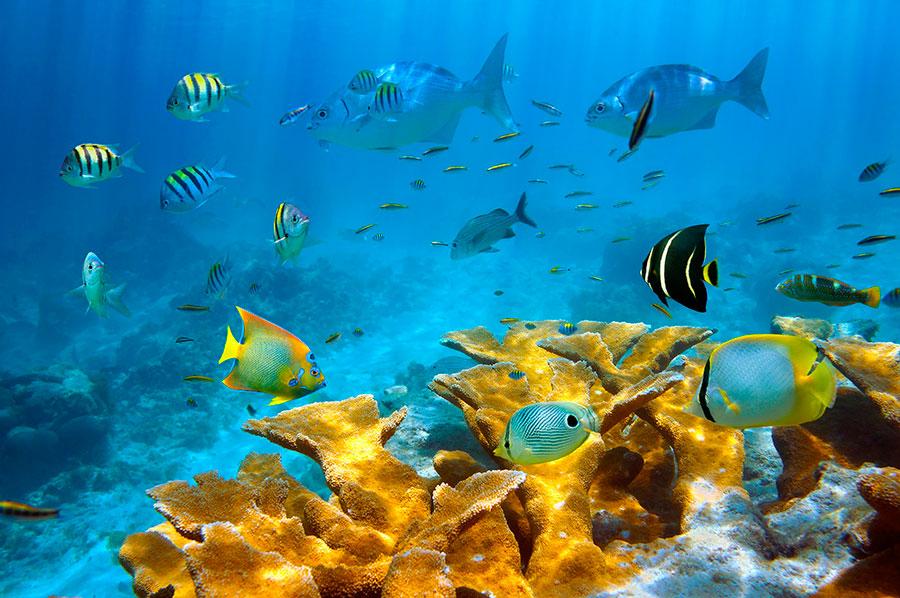 Fondos marinos llenos de vida Fauna de Costa Rica