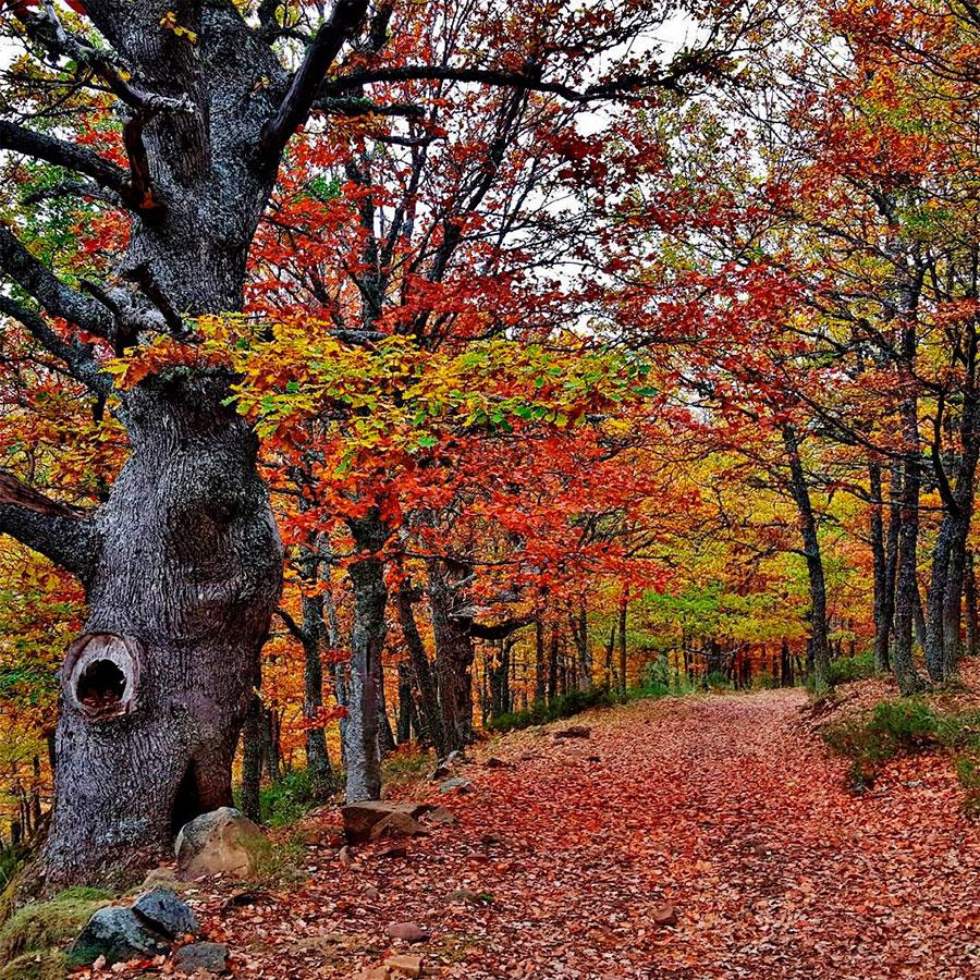 Camino a través del bosque