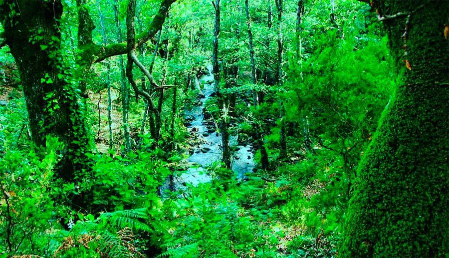 Las selvas de Los Alcornocales