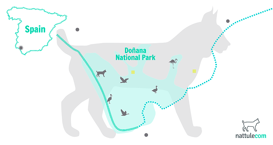 Following the Trail of the 7 Faunal Treasures in Doñana