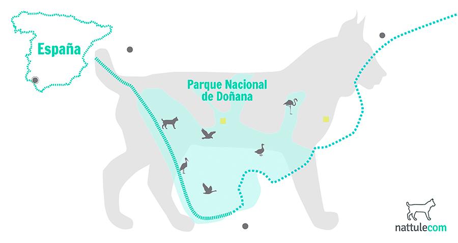 fauna en Doñana