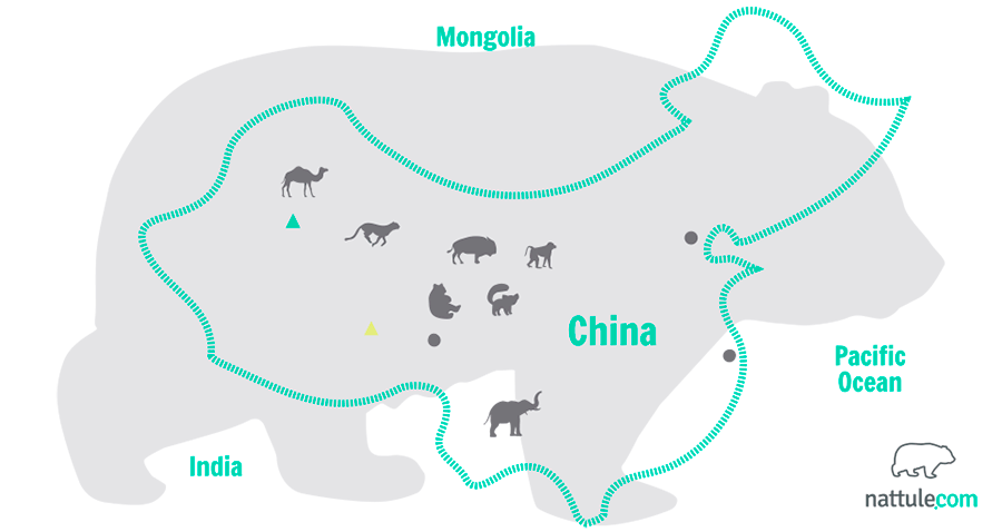Following the Amazing Animals of  China: an Eastern Mishmash of Biodiversity