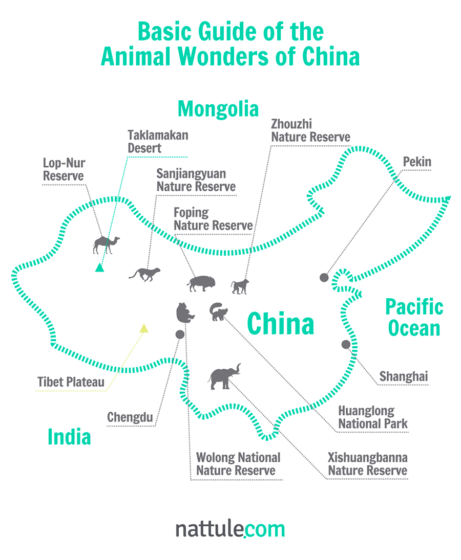 Basic Guide of the Animal Wonders of China