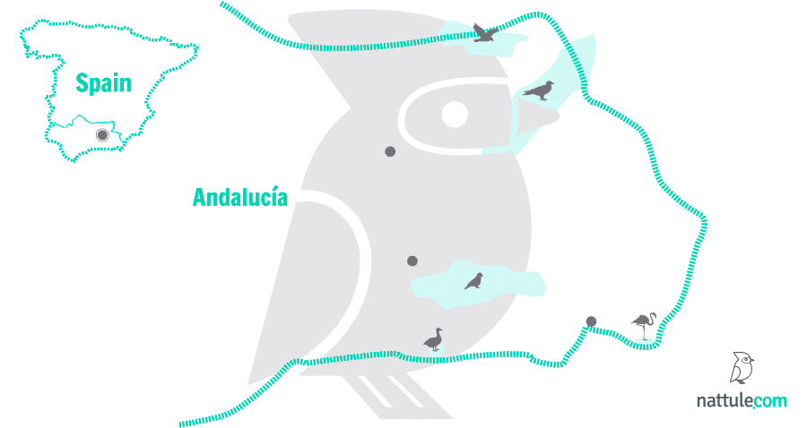 5 Natural Sanctuaries in Eastern Andalucía for Bird Lovers