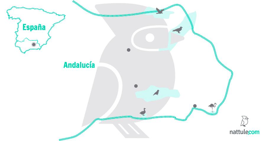 5 santuarios naturales de Andalucía Oriental para entusiastas de las aves