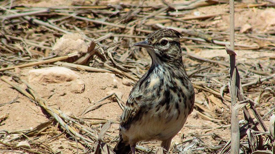 Birdwatching en Andalucía
