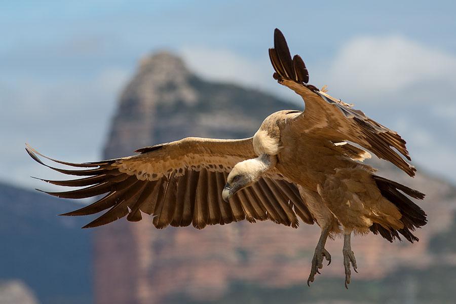 aves de Andalucía Oriental