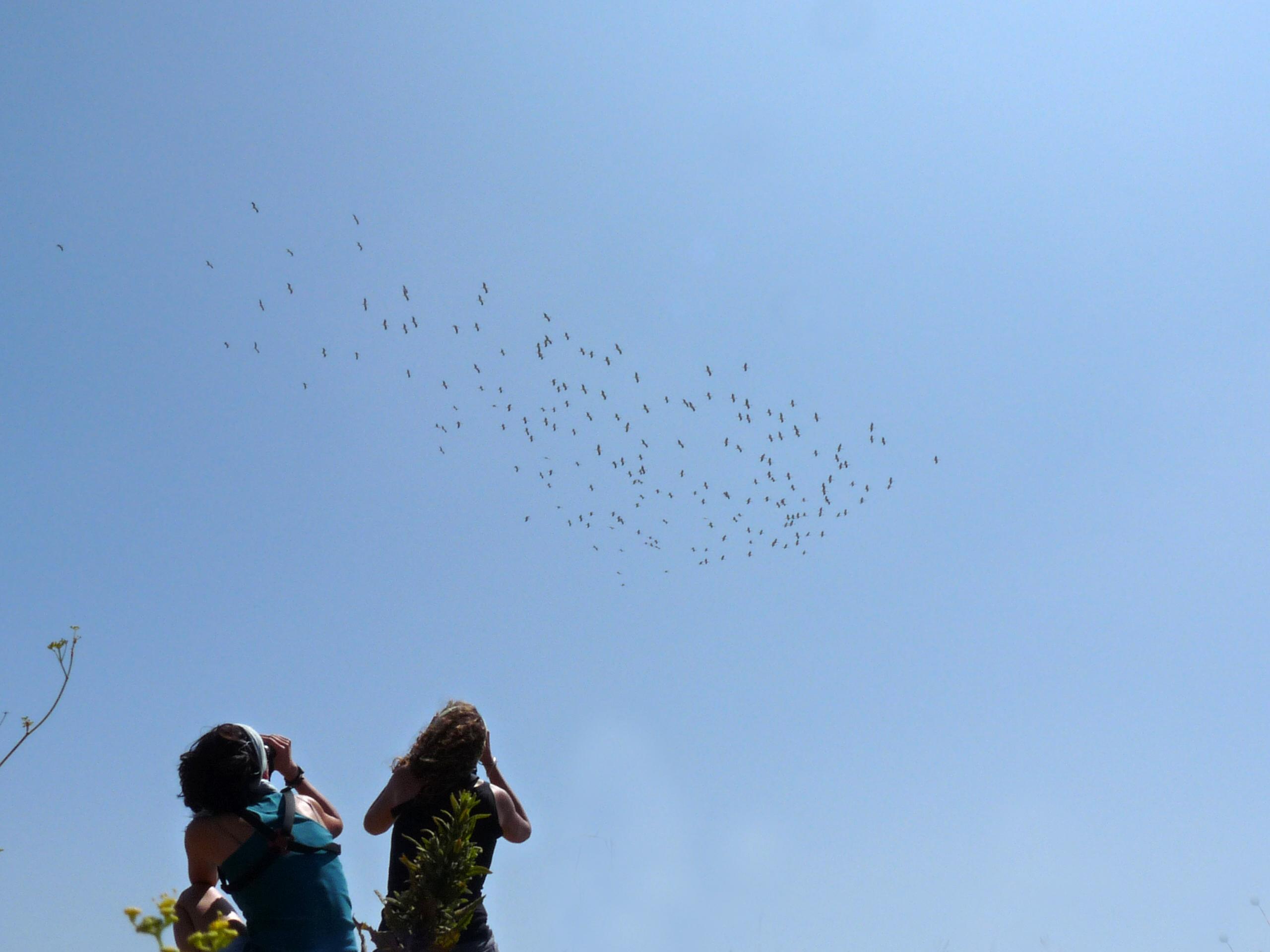 Consejos útiles para tu experiencia Birding en Tarifa