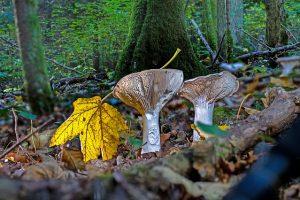 6 rincones de Andalucía ideales para recolectar setas en otoño