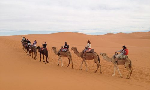 Marruecos-camello-desierto